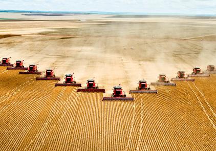 Michael-Pollan-Wheat-Monoculture